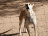 adelaide-farm-dogs-dundee-s28-01-955-e30-13-382-elev-1264m-17