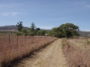 adelaide-farm-turn-off-dundee-s28-02-098-e31-12-682-elev-1243m