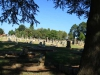 Dundee Cemetery - Grave - general views (10)