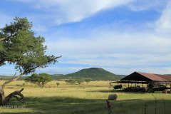 DUNDEE - Lennox Farm