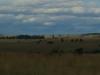 Dundee - Lennox farm - views to east (2)