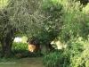 Dundee - Thornley Farm - Rondavel in garden