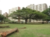 playfair-rd-_-trees-park-s29-50-611-e-31-02-082-elev-14m-7