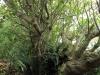 Durban - Berea - Elephant House -  indigenous garden (1)