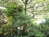 Durban - Berea - Elephant House -  indigenous garden (2)