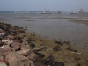 Durban Harbour - Container Terminal - low tide from Embankment (6)