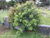 Malvern-Civil-Cemetery-Grave-Anna-Johanna-112