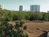 Beachwood Mangrove Nature Reserve -  (13)