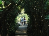 Beachwood Mangrove Nature Reserve -  Board Walks (10)
