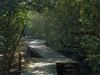 Beachwood Mangrove Nature Reserve -  Board Walks (11)