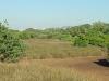 Beachwood Mangrove Nature Reserve -  Board Walks (12)