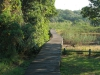 Beachwood Mangrove Nature Reserve -  Board Walks (2)