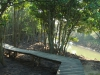 Beachwood Mangrove Nature Reserve -  Board Walks (3)