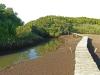 Beachwood Mangrove Nature Reserve -  Board Walks (6)