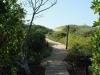 Beachwood Mangrove Nature Reserve -  Board Walks (8)