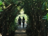 Beachwood Mangrove Nature Reserve -  Board Walks (9)