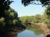 Beachwood Mangrove Nature Reserve -  Tidal Stream (1)