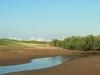 Beachwood Mangrove Nature Reserve -  Tidal Stream (2)