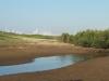 Beachwood Mangrove Nature Reserve -  Tidal Stream (3)
