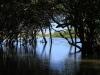 Beachwood Mangroves - Mouth closed -  (34)