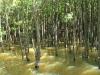 Beachwood Mangroves - Mouth closed -  Mangrove forest (1)