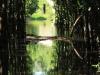 Beachwood Mangroves - Mouth closed -  Mangrove forest (4)