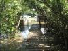 Beachwood Mangroves - Mouth closed - flooded boardwalks (1)