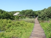 Beachwood Mangroves - Mouth closed - flooded boardwalks (12)