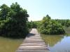 Beachwood Mangroves - Mouth closed - flooded boardwalks (14)
