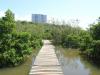 Beachwood Mangroves - Mouth closed - flooded boardwalks (15)