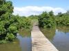 Beachwood Mangroves - Mouth closed - flooded boardwalks (16)