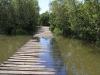 Beachwood Mangroves - Mouth closed - flooded boardwalks (18)