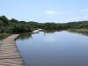 Beachwood Mangroves - Mouth closed - flooded boardwalks (19)