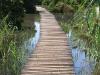 Beachwood Mangroves - Mouth closed - flooded boardwalks (2)