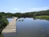 Beachwood Mangroves - Mouth closed - flooded boardwalks (20)