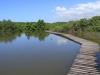 Beachwood Mangroves - Mouth closed - flooded boardwalks (21)