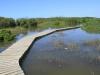 Beachwood Mangroves - Mouth closed - flooded boardwalks (22)