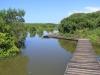 Beachwood Mangroves - Mouth closed - flooded boardwalks (3)