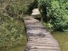 Beachwood Mangroves - Mouth closed - flooded boardwalks (4)