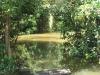 Beachwood Mangroves - Mouth closed - flooded boardwalks (5)