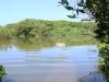 Beachwood Mangroves - Mouth closed - flooded boardwalks (6)