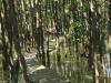 Beachwood Mangroves - Mouth closed - flooded boardwalks (7)