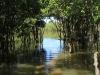 Beachwood Mangroves - Mouth closed - flooded boardwalks (8)