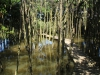 Beachwood Mangroves - Mouth closed - flooded boardwalks (9)