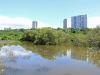 Beachwood Mangroves - Mouth closed -  flooded open areas (2)