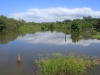 Beachwood Mangroves - Mouth closed -  flooded open areas (3)