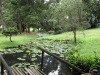 Durban - Japanese Gardens (16)