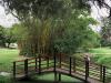 Durban - Japanese Gardens (25)