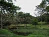Durban - Japanese Gardens (40)