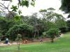 Durban - Japanese Gardens (48)